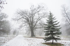 公园在第一雪以后的12月 库存图片