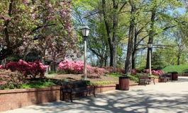 公园在纳稀威 免版税库存照片
