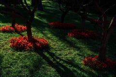 公园在莫斯科的中心 在树的日落光 亚历山大公园 免版税库存照片
