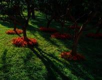 公园在莫斯科的中心 在树的日落光 亚历山大公园 库存照片