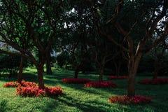 公园在莫斯科的中心 在树的日落光 库存照片