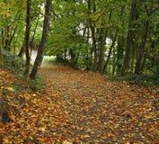 公园在那慕尔 瓦隆 比利时 免版税库存图片