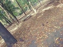 公园在索非亚 库存图片