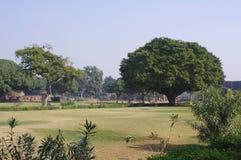 公园在Feroz Shah Kotla,新德里 免版税库存照片