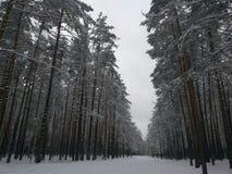 公园在Komarovo村庄  免版税库存照片