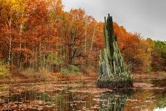 公园在Kromlau,萨克森,德国 惊奇,五颜六色的秋天backg 免版税库存照片