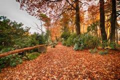 公园在Kromlau,萨克森,德国 惊奇,五颜六色的秋天backg 图库摄影