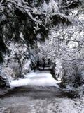 公园多雪的线索 免版税图库摄影