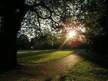 公园日出 库存图片