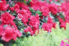 公园春天的开花的花圃 图库摄影