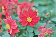 公园春天的开花的花圃 免版税库存照片