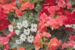 公园春天的开花的花圃 免版税库存图片