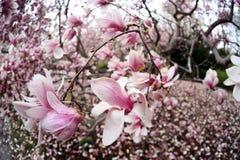 公园春天视图 免版税图库摄影