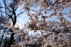 公园树开花在春天 库存照片