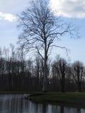 公园树 免版税库存照片