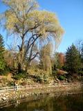 公园横向,秋天 免版税图库摄影