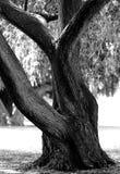 公园照片结构树 图库摄影