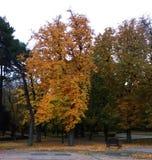 公园的树在秋天 免版税库存图片