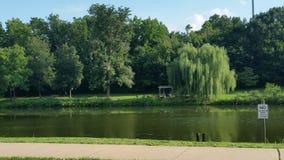 公园的湖 库存图片