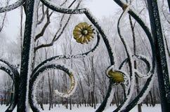 公园篱芭的一个大片段有树冰的 库存照片