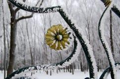 公园篱芭的一个大片段有树冰的 免版税库存图片