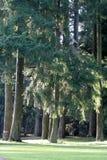 公园结构树 图库摄影