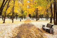公园美丽如画的冬天 图库摄影