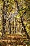 公园胡同在秋天 库存图片