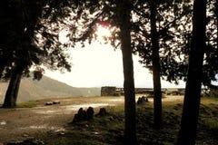 公园自然卡索拉 库存照片