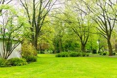 公园自然树 库存图片