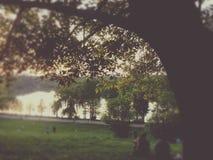 公园自然 免版税库存照片