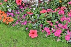 公园花展的开花的花圃 免版税库存图片