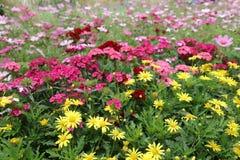 公园花展的开花的花圃 免版税图库摄影