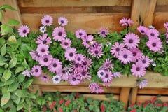公园花展的开花的花圃 库存图片
