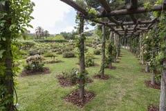 公园西万提斯,玫瑰园,巴塞罗那 免版税库存照片