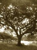 公园视图 库存照片