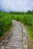 公园足迹和灌木树 库存图片