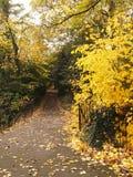 公园足迹和黄色秋叶 库存图片
