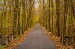 公园足迹在春天 库存图片