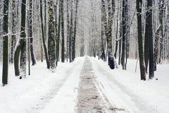 公园路冬天 免版税库存照片