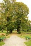 公园路径 免版税图库摄影