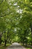 公园路 免版税库存照片