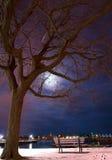 公园长椅、结构树、江边和蓝色夜空。 库存图片