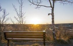 公园长椅和亚斯本树在日落在卡尔加里,亚伯大, Canad 库存照片