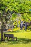 公园长椅在一个豪华的绿色庭院里 免版税图库摄影