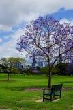 公园长椅在春天的开花的兰花楹属植物树下 免版税库存图片