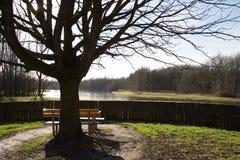 公园长椅有视图 库存图片