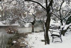公园雪冬天 免版税库存图片