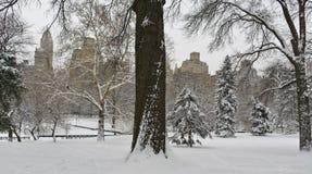 公园雪风暴 库存照片