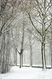 公园雪 库存照片